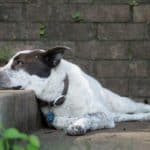 Vet-Recommended Natural Remedies for Arthritis in Dogs
