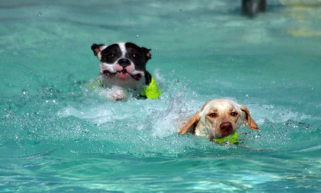 Is Your Dog Drinking Pool Water?