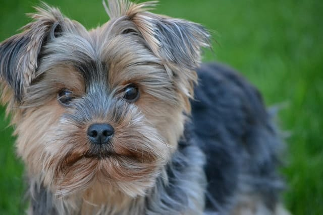 Will My Dog Survive Pancreatitis?
