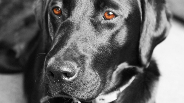 Avoid a Dog Fish Oil Overdose (Cats, Too)