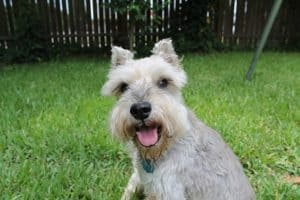 Commercial Dog Food for Pancreatitis