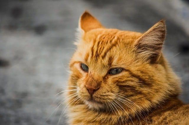 Cat URI Not Getting Better
