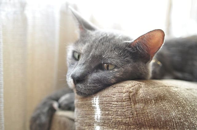 how to prevent uti in cats