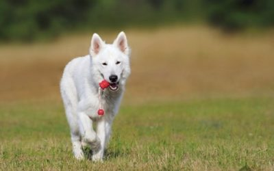4 Reasons Your Older Dog's Back Legs Are Collapsing