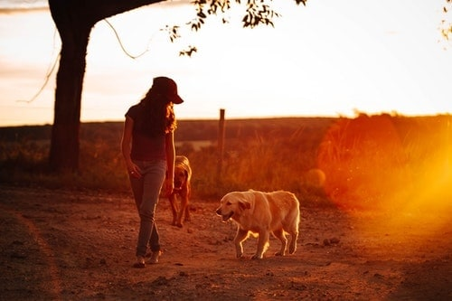 woman walking outdoors at sunset with two large dogs