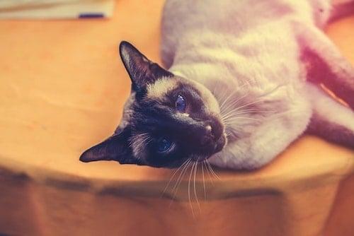 Cat Food for Pancreatitis & Sensitive Stomachs: Vet's Picks