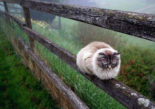 Light brown cat sitting on fence rail