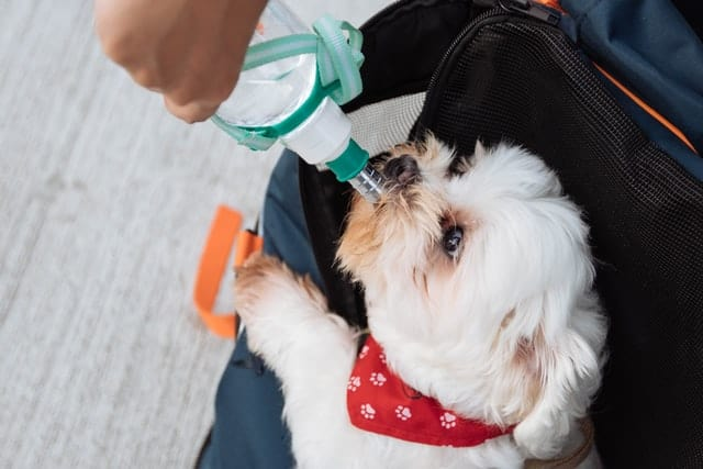 dog drinking water from bottle
