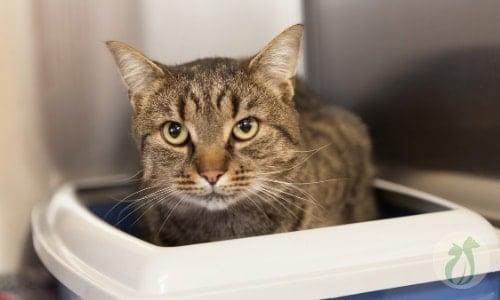 cat sitting in a litter box