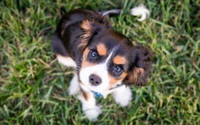 Can I Give My Dog Human Probiotics?