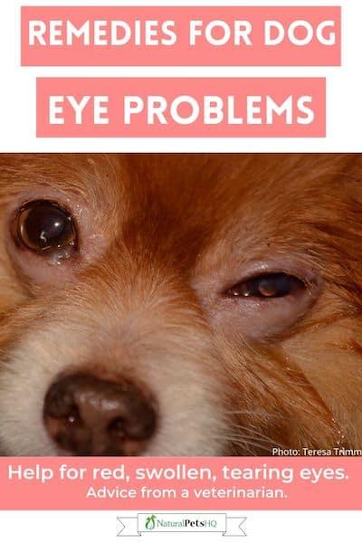 Remedies for Dog Eye Problems