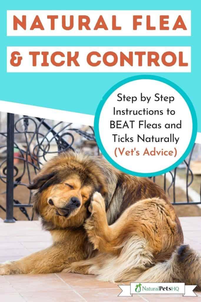 natural flea and tick remedies