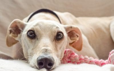 Is Turmeric Good for Dogs? What the Science Says