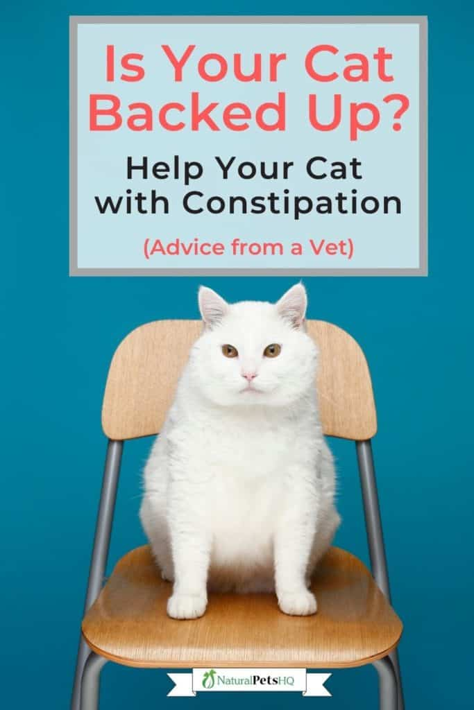 constipated cat remedies