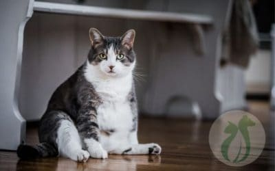 The 1 Big Reason Your Cat Hasn't Pooped in 5 Days