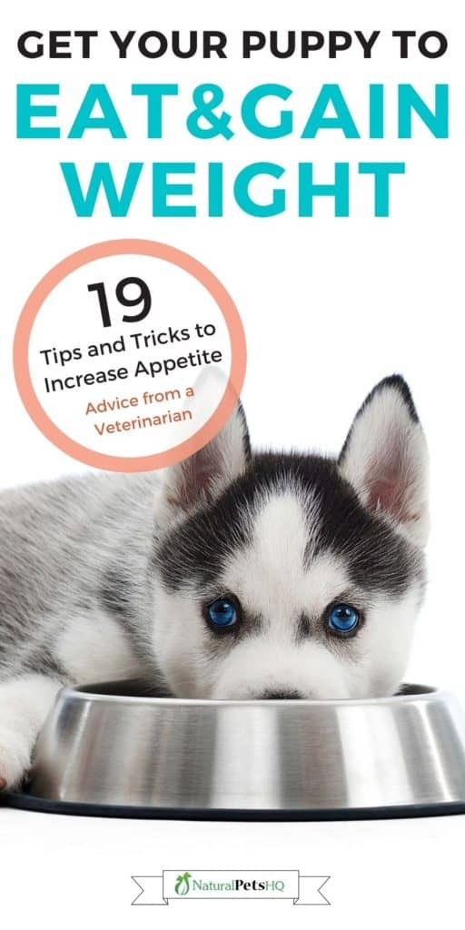 19 Tips to Get Your Puppy to Gain Weight