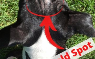 Early Stage Mange in Dogs: 3 Best Home Remedies