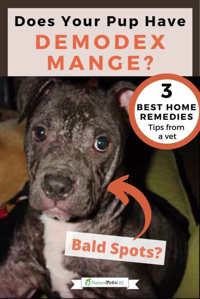 graphic for early stage mange in dogs