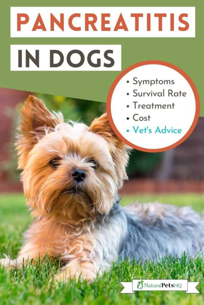 Pancreatitis in dogs graphic