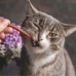 Ask a Vet: Can Cats Eat Dog Treats?