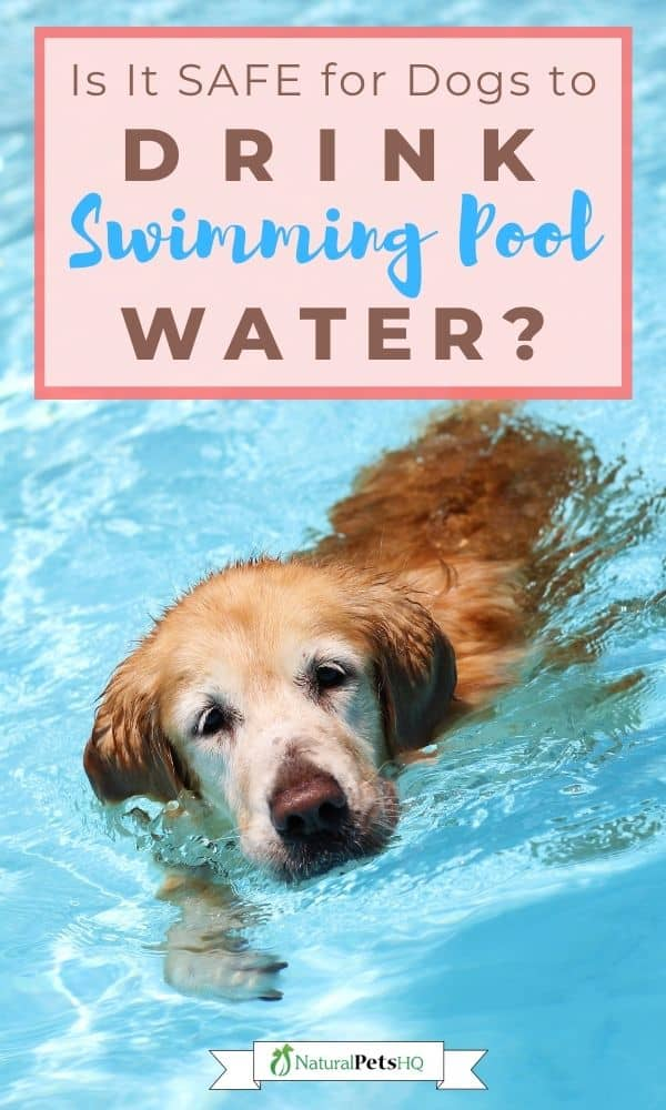 dog drinking swimming pool water graphic