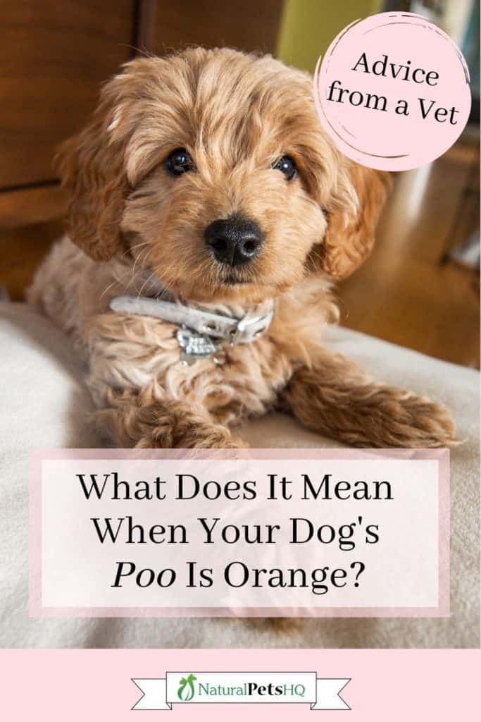 Dog's poop looks like strawberry jelly pinterest graphic