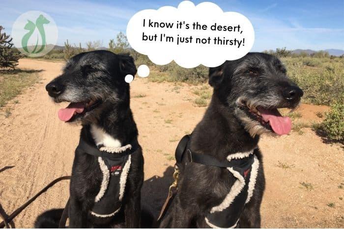 2 black dogs on a hike