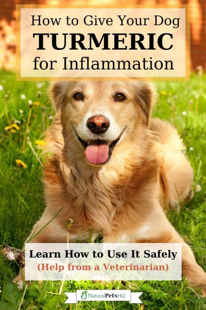 is turmeric good for dogs Pinterest graphic