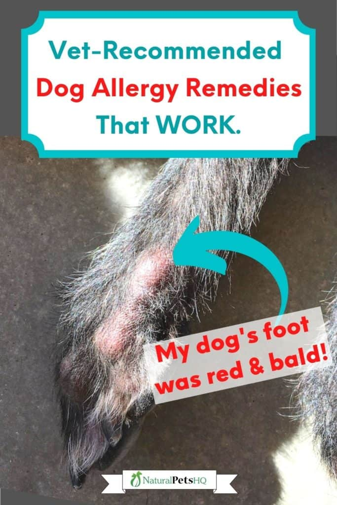 Pinterest graphic for alternative to Apoquel for dogs