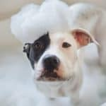 Vet-Recommended Alternatives to Apoquel® for Itchy Dogs