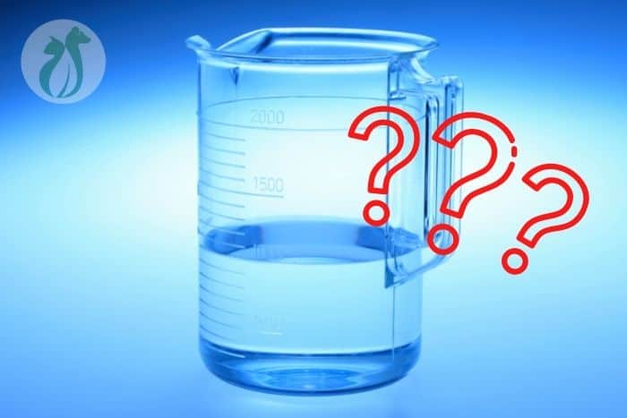 how much water should a dog drink a day?